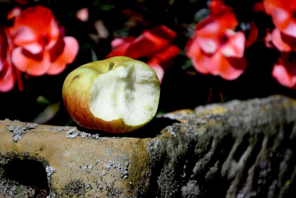Süß-säuerlich und sehr saftig: Der Apfel Prinz Albrecht von Preußen, angebissen von mir. Foto: Jürgen Krüger